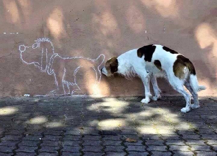 Hunde-Illusion